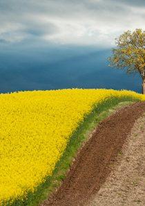 Boje proljeća